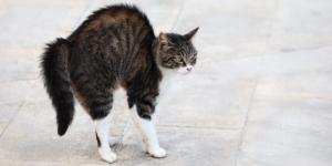 Télécharger photo cat tail png