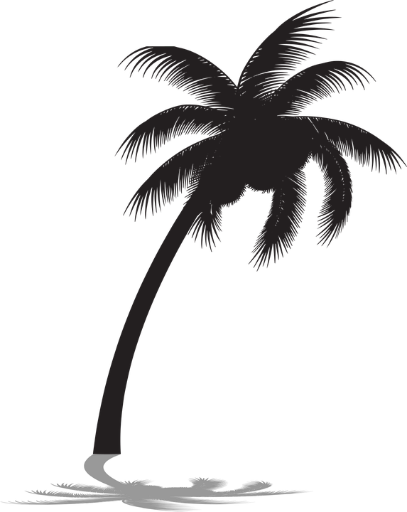 Télécharger photo palm tree shadow png