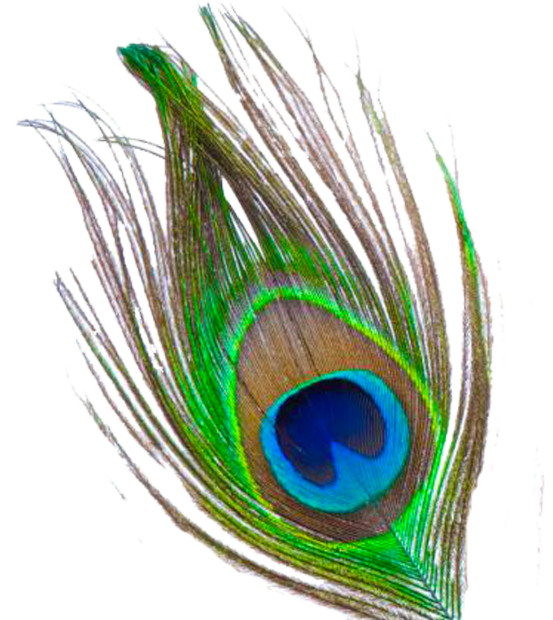 Télécharger photo transparent peacock feather png